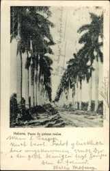 Postcard Habana Havanna Kuba, Paseo de palmas reales, Palmenallee