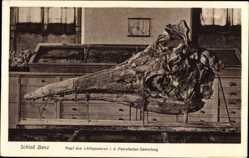 Postcard Bad Staffelstein, Schloss Banz, Kopf eines Ichtiosaurus, Petrefactensammlung