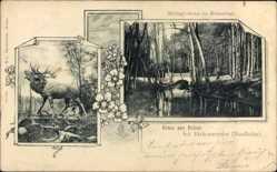 Postcard Briese Birkenwerder Nordbahn im Kreis Oberhavel, Schlagbrücke, Hirsch