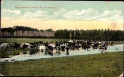 Postcard Argentinien, Rodeo en una Estancia, Viehtrieb an einem Fluss