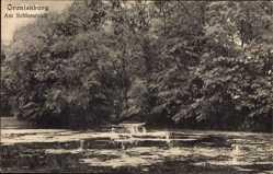 Postcard Oranienburg im Kreis Oberhavel, Partie am Schlossteich, Vegetation
