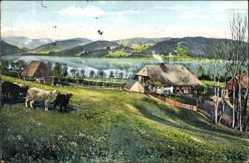 Postcard Titisee Neustadt im Breisgau Hochschwarzwald, Häuser, Schafe, Umgebung