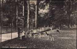 Postcard Arnhem Gelderland, Hertenkamp Sonsbeek, Rehfütterung
