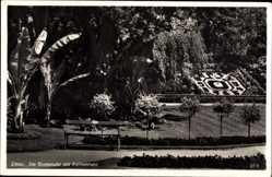 Postcard Zittau in der Oberlausitz, Blumenuhr mit Palmehain a.d. Stadtgärtnerei