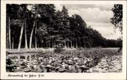 Postcard Gehren im Thüringer Wald, Blick auf den Seerosenteich, Wald