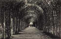 Postcard Kołobrzeg Kolberg Pommern, Blick in den Laubengang, Vegetation