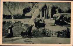 Postcard Hamburg Eimsbüttel Stellingen, Carl Hagenbeck's Tierpark, Seelöwen