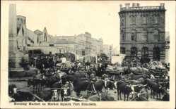Postcard Port Elizabeth Südafrika, Morning Market on Market Square, Rinder
