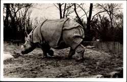 Postcard Hamburg Eimsbüttel Stellingen, Hagenbecks Tierpark, Indisches Panzernashorn