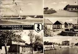 Wappen Ak Seeheilbad Zingst an der Ostsee, Darss, Möwen, Strand, Dünenhaus