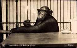 Postcard Zoologischer Garten Berlin, Schimpanse Missie raucht Zigarette