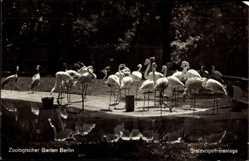 Postcard Zoologischer Garten Berlin, Stelzvogelfreianlage