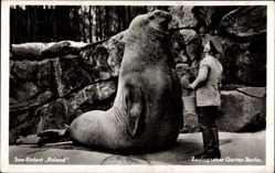 Postcard Zoologischer Garten Berlin, Seeelefant Roland mit Pfleger