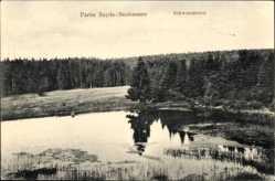 Postcard Sayda Neuhausen im Erzgebirge, Partie am Schwemmteich, Wald