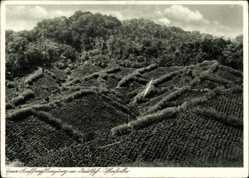 Postcard Tansania, Ansicht der Kaffeepflanzung, Wälder, Feld