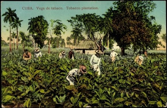 Postcard Kuba Vega de ...