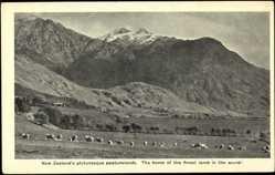 Ansichtskarte / Postkarte Neuseeland, Pittureske Weideländer, Schafe, Berge