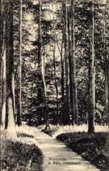 Postcard Bühl Leverkusen in Nordrhein Westfalen, Waldpartie, Schlebusch