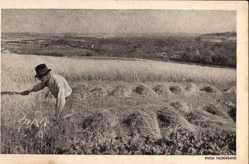 Ak Niederlande, Mooi Nederland, Landwirt bei der Feldarbeit, Strohernte