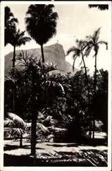 Palmen, Foto Ak