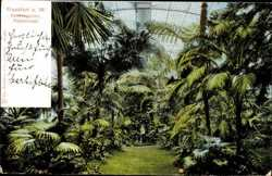 Palmen Haus