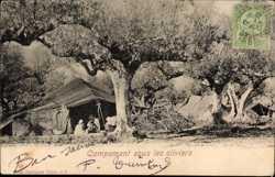 Campement sous les oliviers