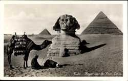 Kamel, Sphinx