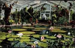 Pflanzenhaus Victoria regia I.